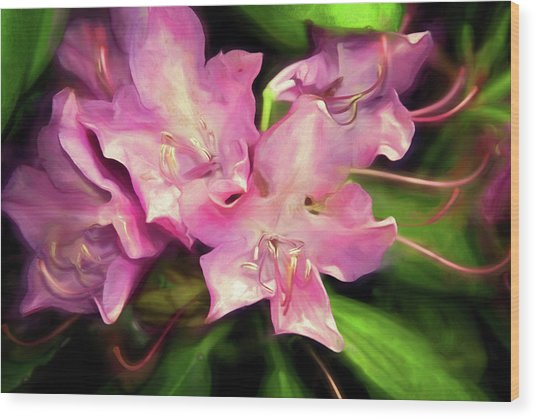 Wood Print featuring the mixed media Soft Rhodie Blooms 6 by Lynda Lehmann