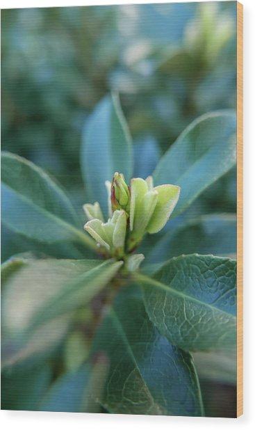 Softly Blooming Wood Print