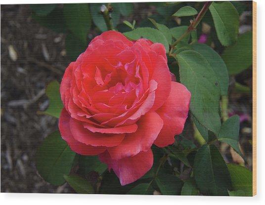 Solitary Rose Wood Print