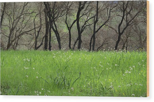 Sonoma Valley Rp_1148_18 Wood Print