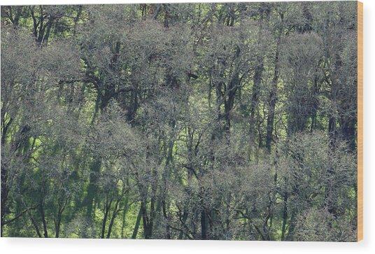Sonoma Valley Rp_1310_18 Wood Print