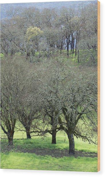Sonoma Valley Rp_1439_18 Wood Print