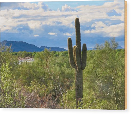 Sonoran Desert Landscape Post-monsoon Wood Print