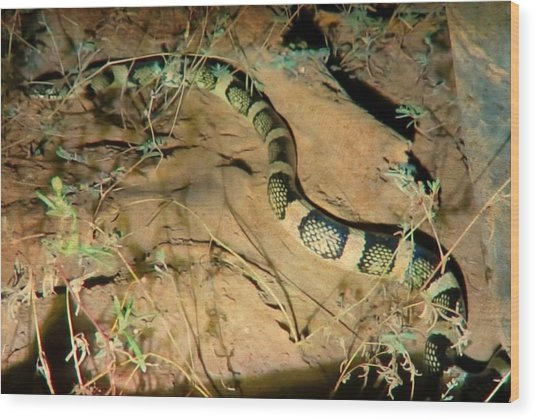 Wood Print featuring the photograph Sonoran Desert Longnosed Snake Vintage by Judy Kennedy