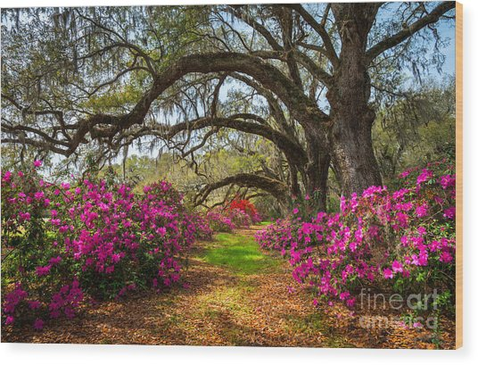 South Carolina Spring Flowers Wood Print