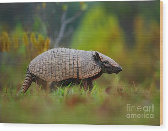 Southern Naked-tailed Armadillo Wood Print
