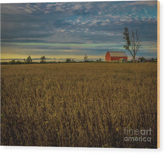 Soybean Sunset Wood Print
