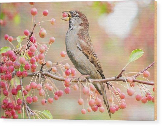 Sparrow Eating Berries Wood Print