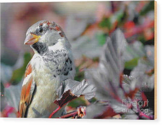 Sparrow Profile Wood Print