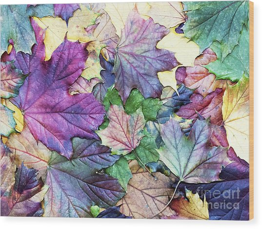 Special Colored Autumn Leaves Wood Print