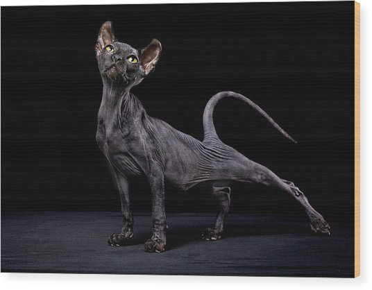 Sphynx Cat Wood Print by Alexandra Draghici