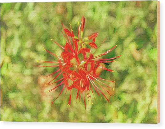 Spider Lily Pop Wood Print