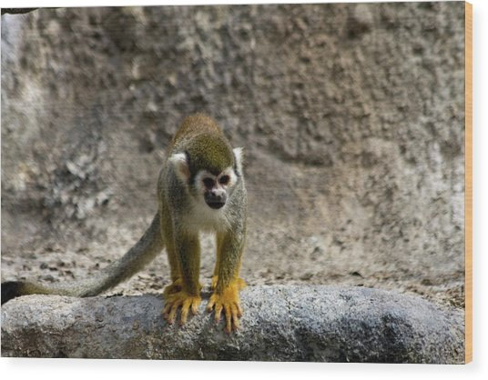 Spider Monkey On Rock Wood Print