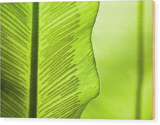 Spores Of A Fern Wood Print by By Ken Ilio