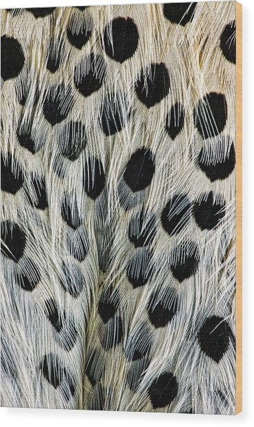 Spot Pattern On Belly Feathers Wood Print