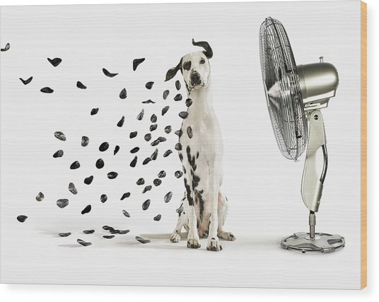 Spots Flying Off Dalmation Dog Wood Print by Gandee Vasan