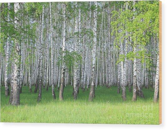 Spring Birch Grove Wood Print by Kirillov Alexey