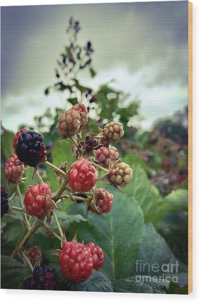 Early Summer Blackberries Wood Print by JMerrickMedia