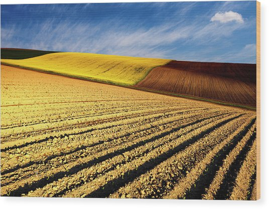 Spring Fields Wood Print