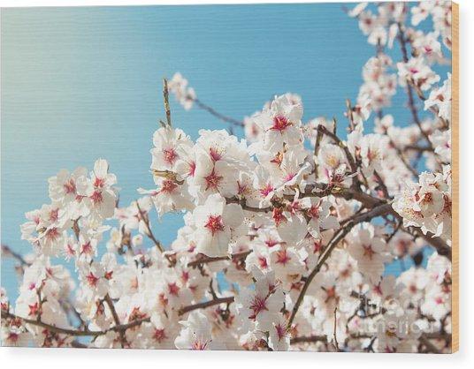 Spring Flowers. Spring Flowers Wood Print