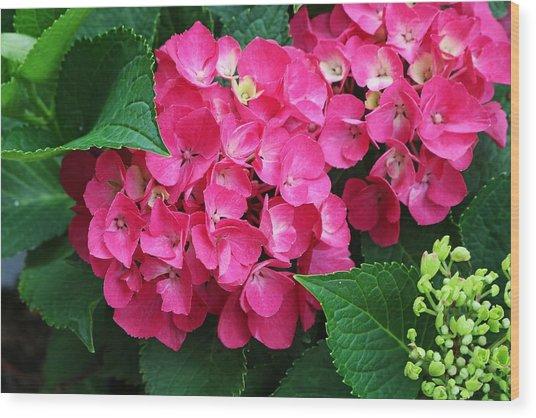Spring Hydrangea Wood Print