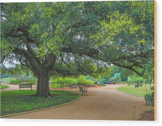 Spring In Hermann Park Wood Print