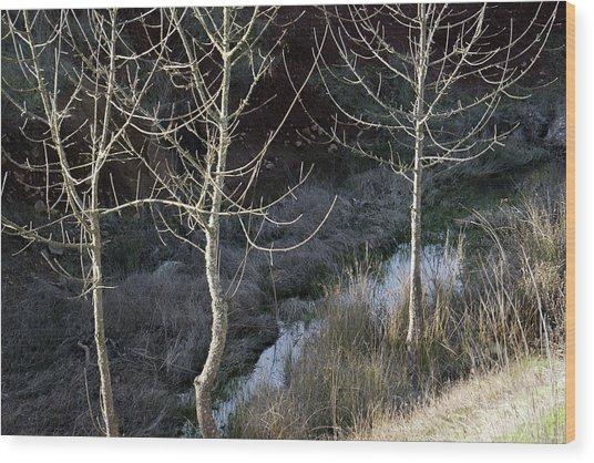 Spring Lake_743_18 Wood Print