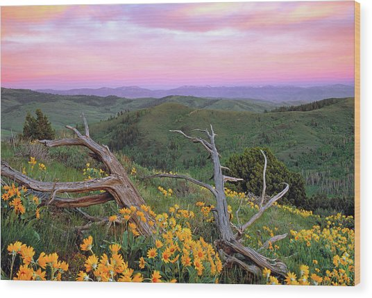 Spring Sunset Wood Print by Leland D Howard