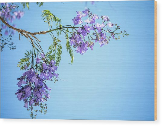 Springtime Beauty Wood Print