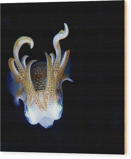 Squid At Night Wood Print