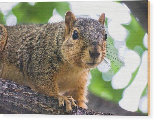 Squirrel Close Up Wood Print