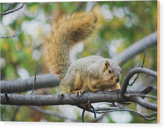 Squirrel Crouching On Tree Limb Wood Print
