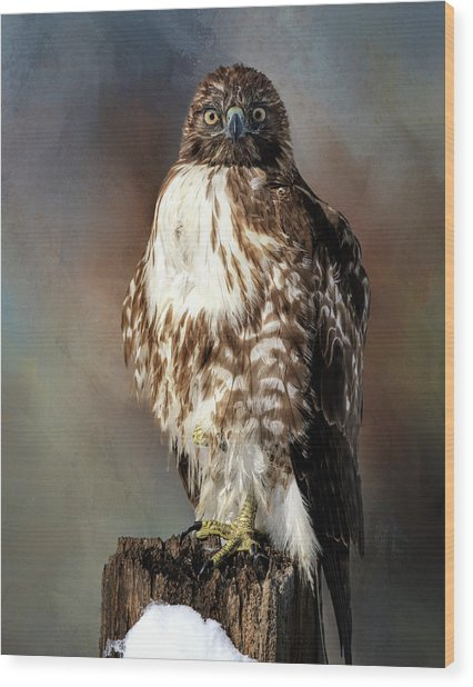 Stare Down With A Hawk Wood Print