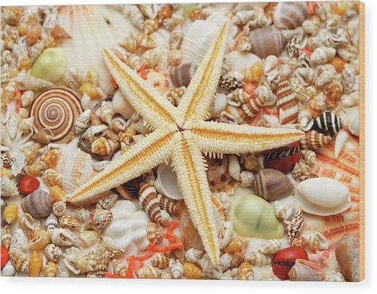 Starfish And Assorted Seashells Wood Print by Imagemore Co.,ltd.