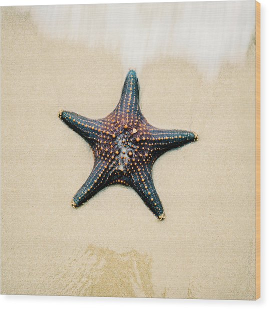 Starfish On The Beach Sand. Close Up. Wood Print