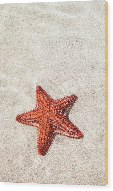 Starfish Under Water Wood Print