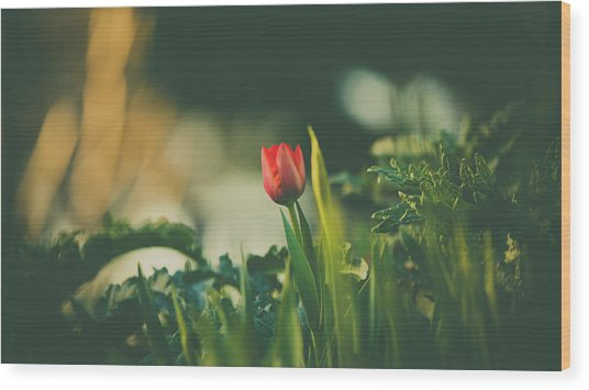 Start Of Spring Wood Print