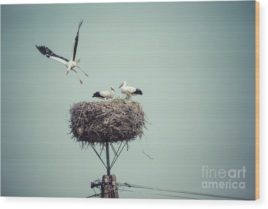 Stork With Baby Birds In The Nest Wood Print