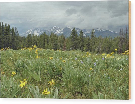 Stormy Tetons And Flowers Wood Print