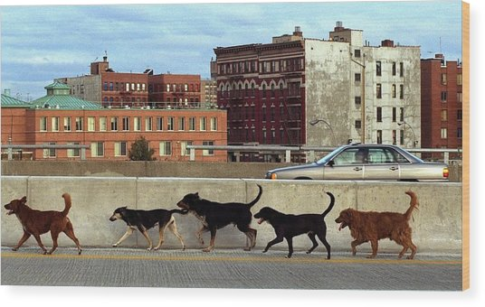 Stray Dogs Stroll Along The Bruckner Wood Print