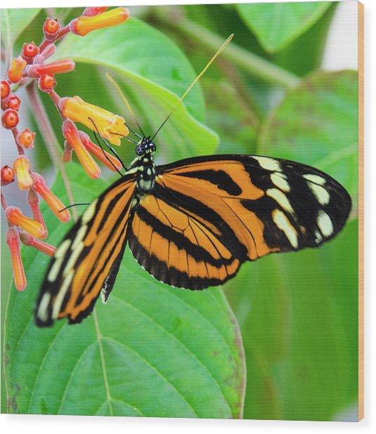 Striking In Orange And Black Wood Print