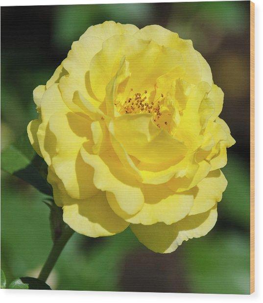 Striking In Yellow Wood Print