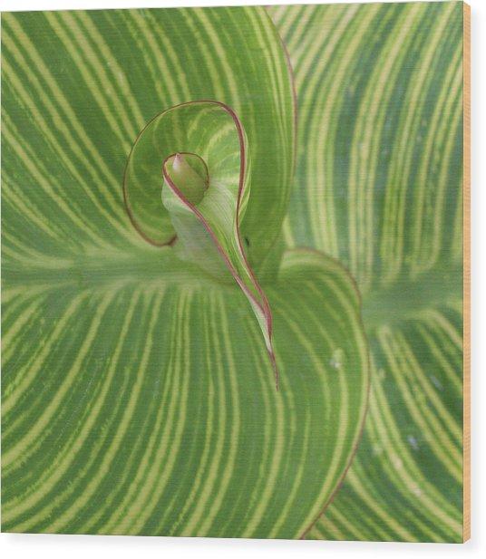 Striped Canna Leaf Detail Wood Print