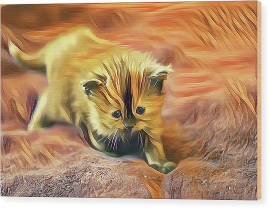 Striped Forehead Kitten Wood Print