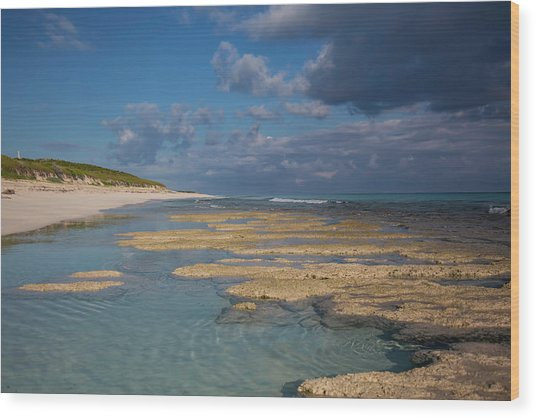 Stromatolites On Stocking Island Wood Print
