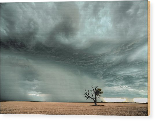Strong Lone Tree Wood Print