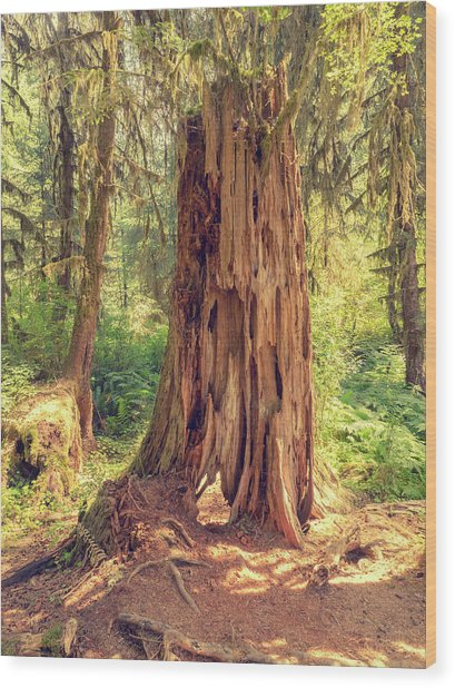 Stump In The Rainforest Wood Print