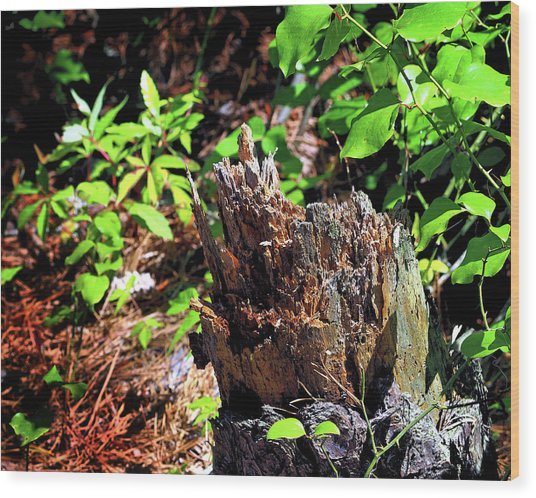 Wood Print featuring the photograph Stumped On Assateague Island by Bill Swartwout Fine Art Photography