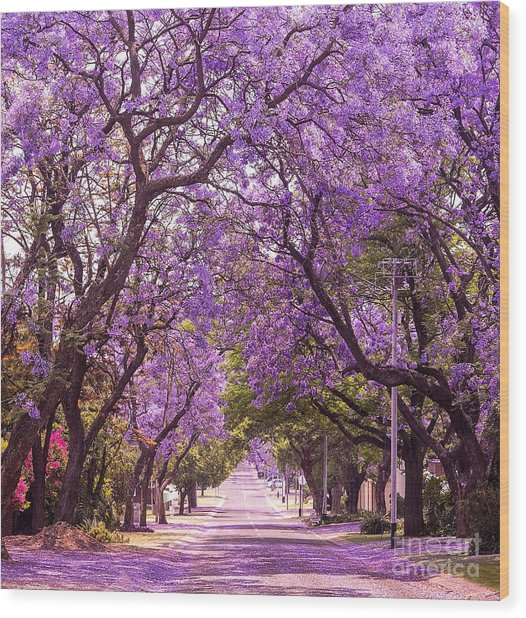 Stunning Alley With Wonderful Violet Wood Print