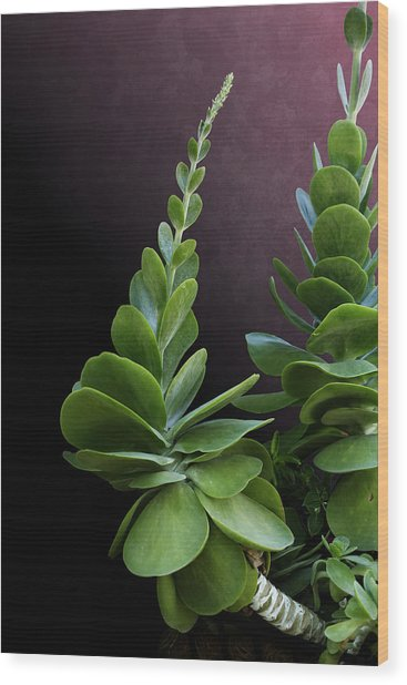Succulent Spear Wood Print